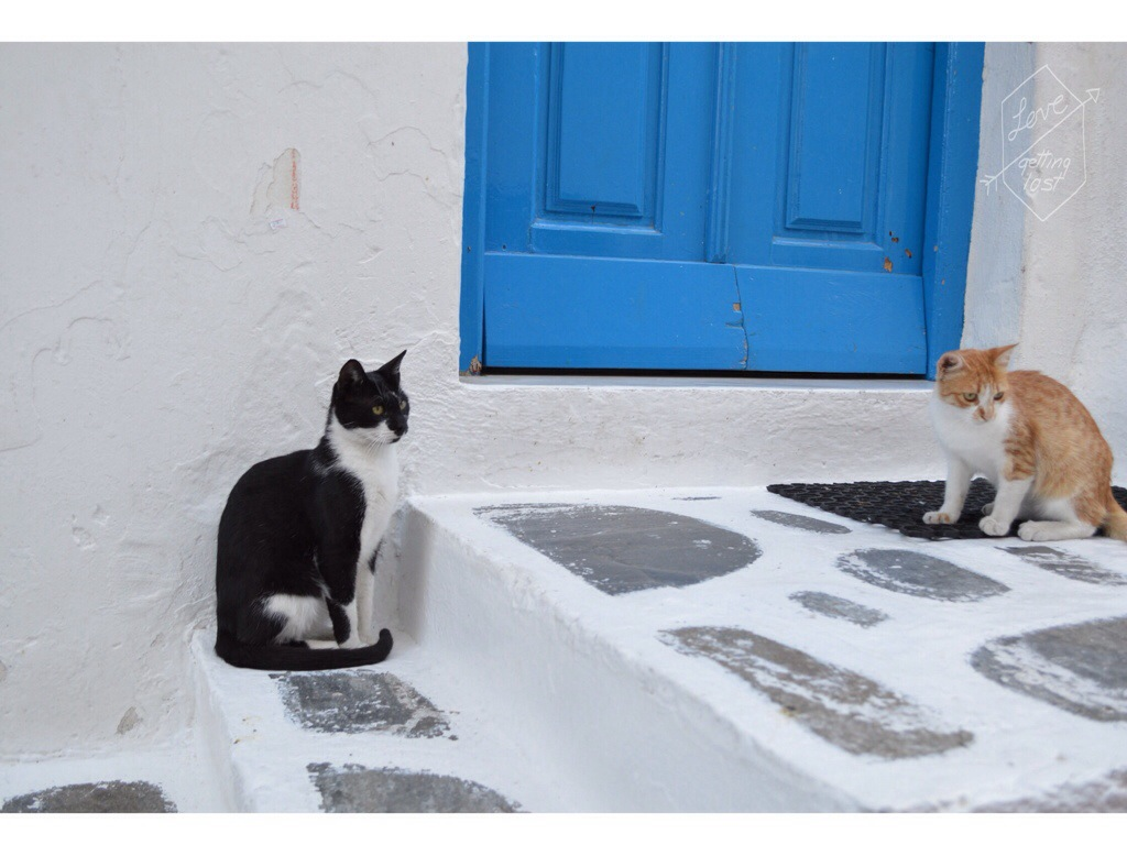 street cats in Mykonos Greece