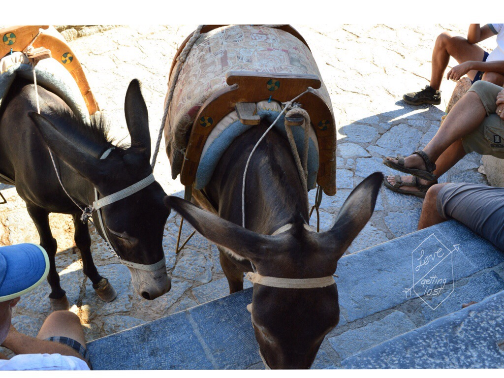 Donkey rides greece