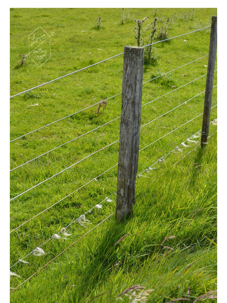 sheep field fencing, Orkney Islands, Scotland