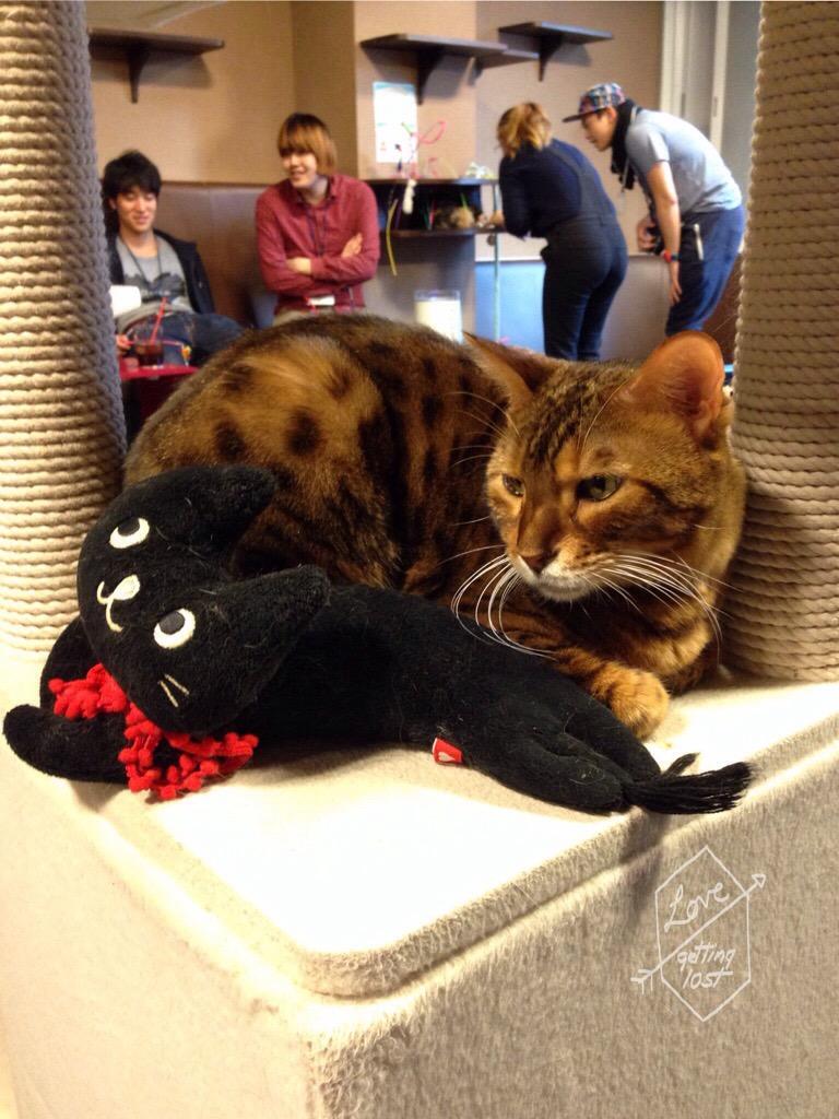 Cat and friend, Calico Cat Cafe, Shinjuku, Tokyo, Japan