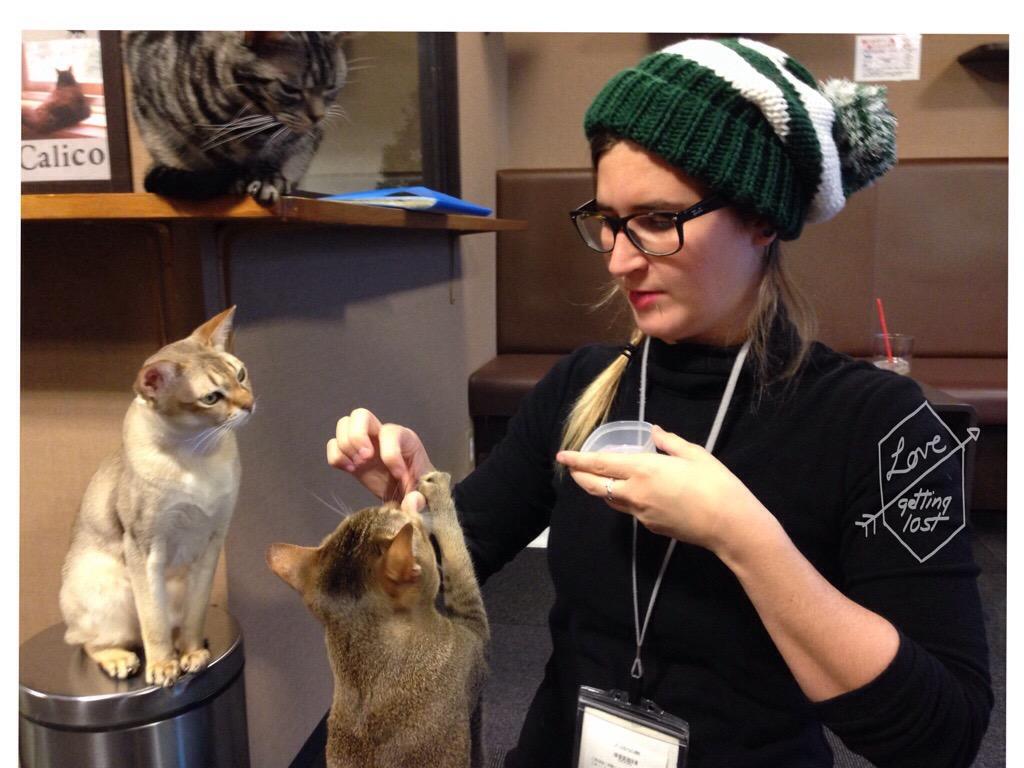 feeding cats at the Calico Cat Cafe, Shinjuku, Tokyo, Japan