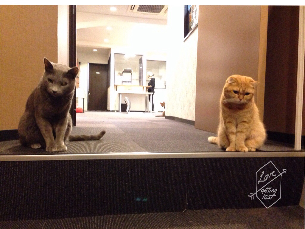 Cat guards, Calico Cat Cafe, Shinjuku, Tokyo, Japan