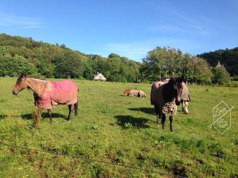 Horses grazing, Lunga Estate, Argyll, Scotland